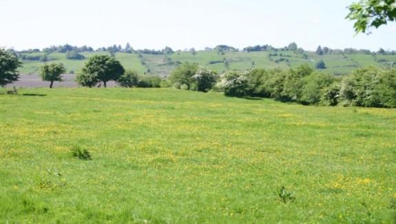 Fields #3